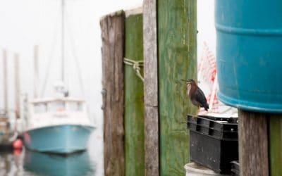 Narragansett Deep Sea Fishing